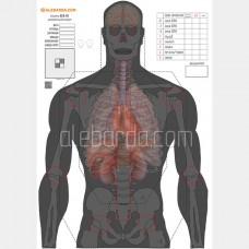 Алебарда мішень анатомічний сілует ALB-50 (5 шт)